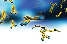 customized molecular and cellular purification services