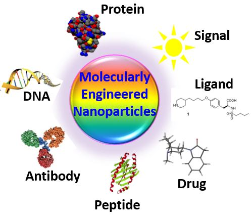 molecularly-engineered-nanoparticles with variety of functional groups